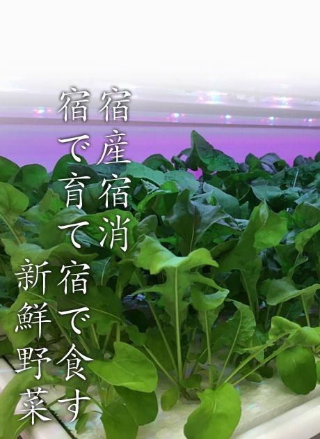 宿産宿消・宿で育て宿で食す新鮮野菜